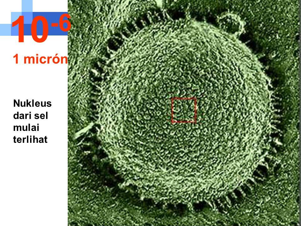 Perjalanan mulai masuk kedalam sel.... 10 -5 10 micron