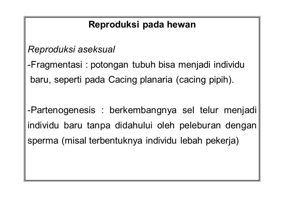 Reproduksi pada hewan Reproduksi aseksual -Fragmentasi : potongan tubuh bisa menjadi individu baru, seperti pada Cacing planaria (cacing pipih). -Part