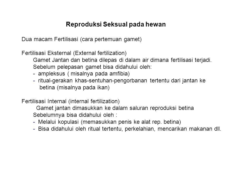 Reproduksi Seksual pada hewan Dua macam Fertilisasi (cara pertemuan gamet) Fertilisasi Eksternal (External fertilization) Gamet Jantan dan betina dile