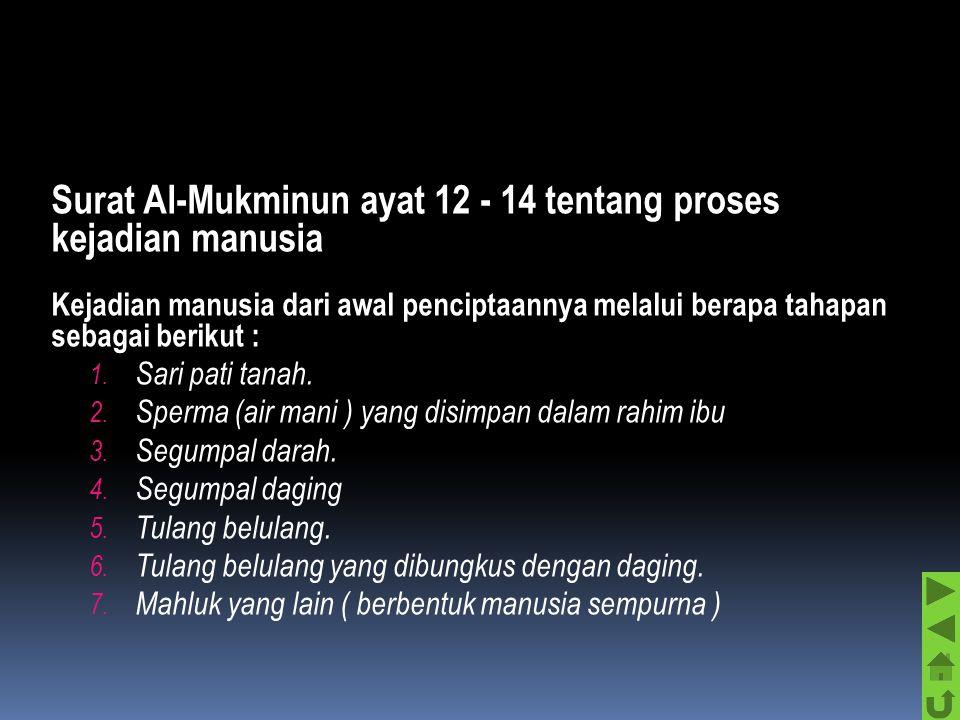 Surat Al-Mukminun ayat 12 - 14 tentang proses kejadian manusia Kejadian manusia dari awal penciptaannya melalui berapa tahapan sebagai berikut : 1.