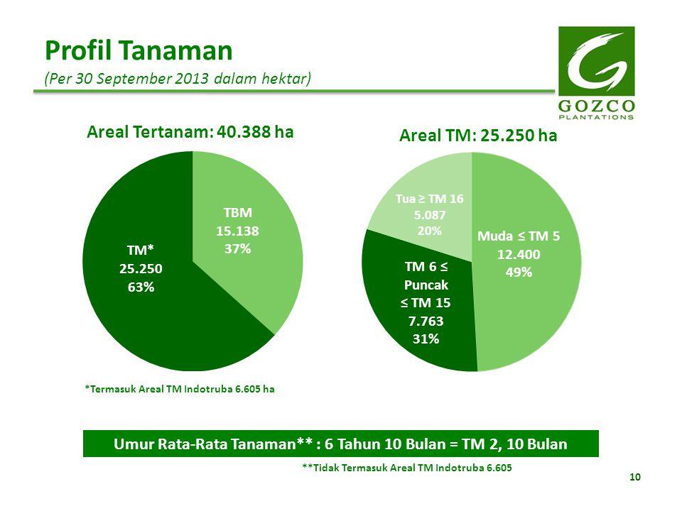 10 Profil Tanaman (Per 30 September 2013 dalam hektar) *Termasuk Areal TM Indotruba 6.605 ha Umur Rata-Rata Tanaman** : 6 Tahun 10 Bulan = TM 2, 10 Bu