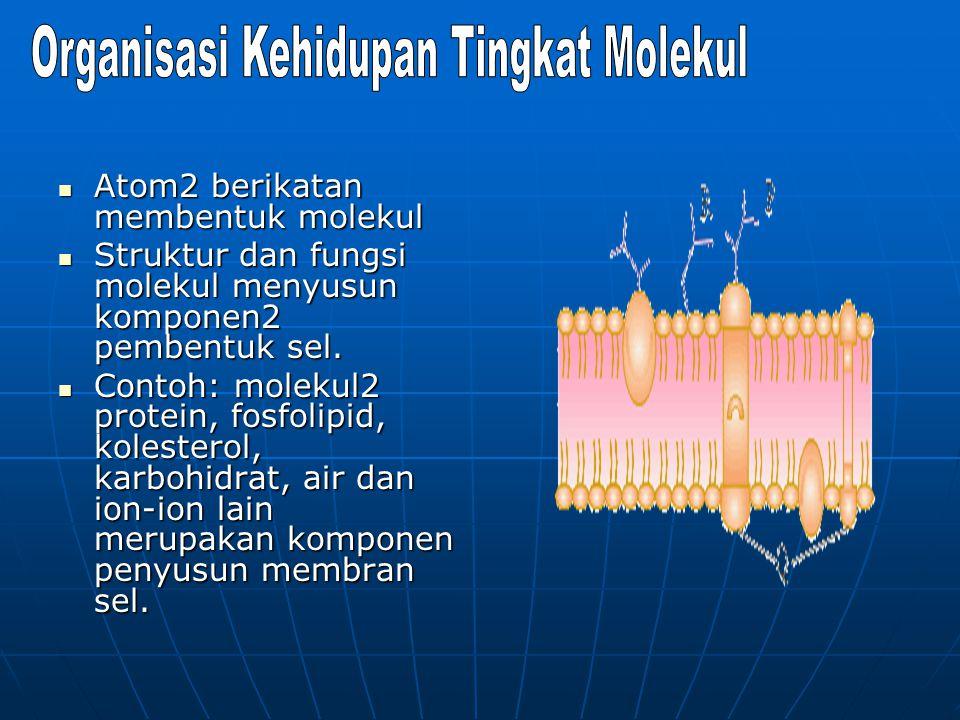 Atom2 berikatan membentuk molekul Atom2 berikatan membentuk molekul Struktur dan fungsi molekul menyusun komponen2 pembentuk sel. Struktur dan fungsi