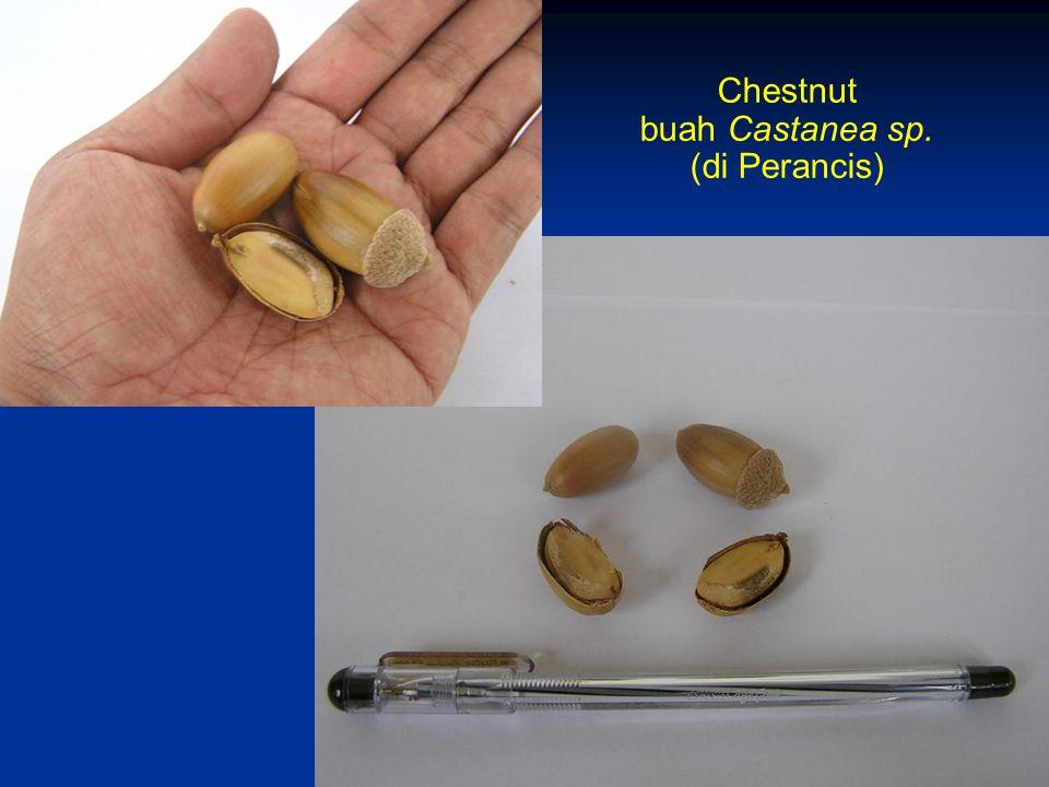 Chestnut buah Castanea sp. (di Perancis)