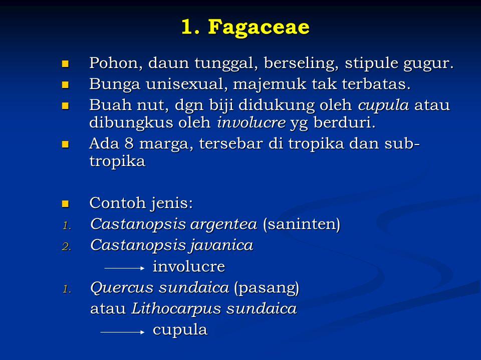 1. Fagaceae Pohon, daun tunggal, berseling, stipule gugur. Pohon, daun tunggal, berseling, stipule gugur. Bunga unisexual, majemuk tak terbatas. Bunga