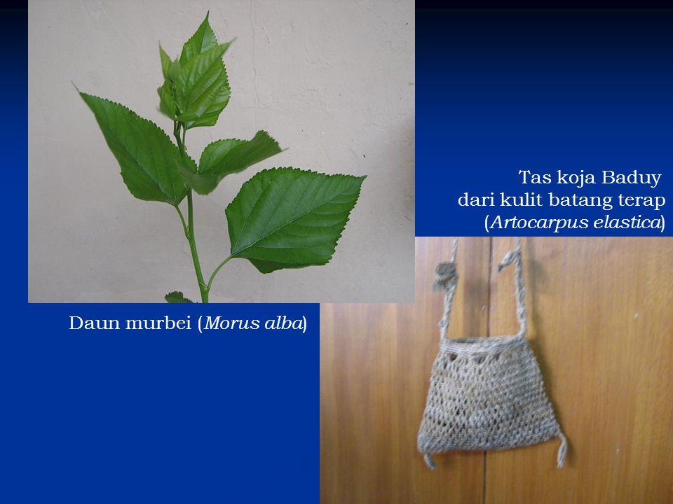 Daun murbei ( Morus alba ) Tas koja Baduy dari kulit batang terap ( Artocarpus elastica )