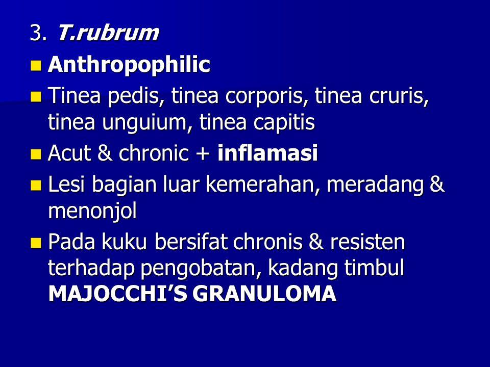 3. T.rubrum Anthropophilic Anthropophilic Tinea pedis, tinea corporis, tinea cruris, tinea unguium, tinea capitis Tinea pedis, tinea corporis, tinea c