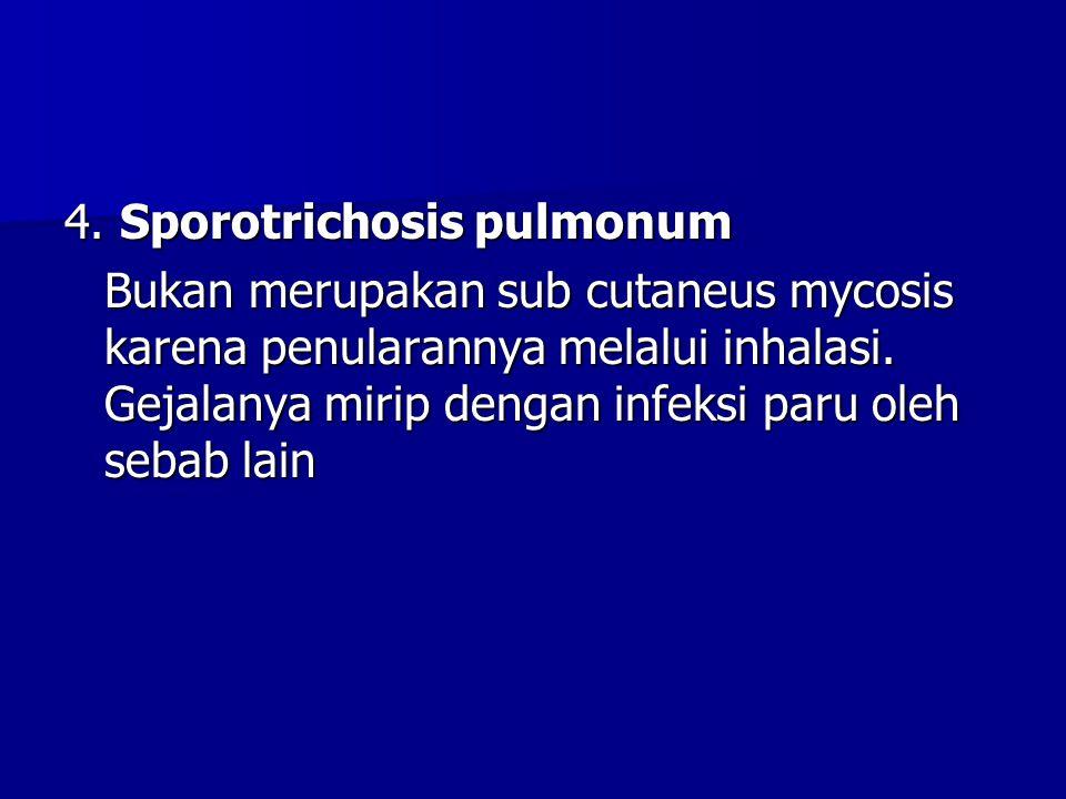 4. Sporotrichosis pulmonum Bukan merupakan sub cutaneus mycosis karena penularannya melalui inhalasi. Gejalanya mirip dengan infeksi paru oleh sebab l