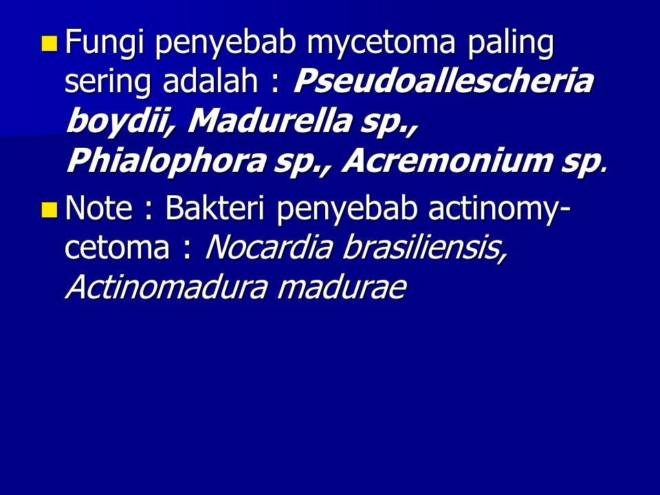 Fungi penyebab mycetoma paling sering adalah : Pseudoallescheria boydii, Madurella sp., Phialophora sp., Acremonium sp. Fungi penyebab mycetoma paling