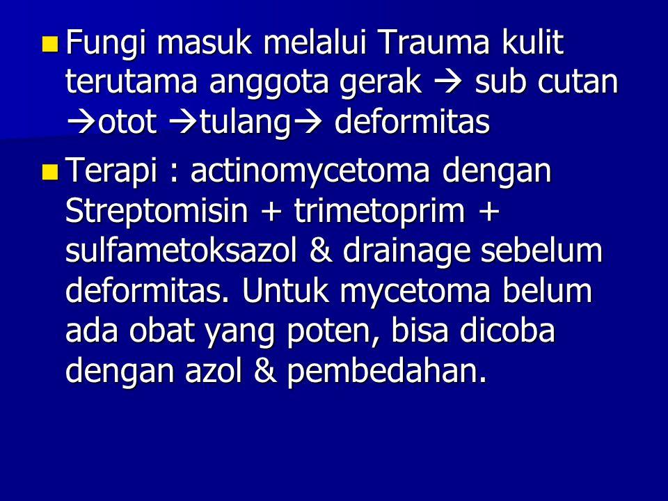 Fungi masuk melalui Trauma kulit terutama anggota gerak  sub cutan  otot  tulang  deformitas Fungi masuk melalui Trauma kulit terutama anggota ger