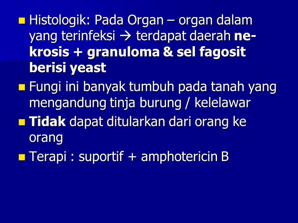 Histologik: Pada Organ – organ dalam yang terinfeksi  terdapat daerah ne- krosis + granuloma & sel fagosit berisi yeast Histologik: Pada Organ – orga