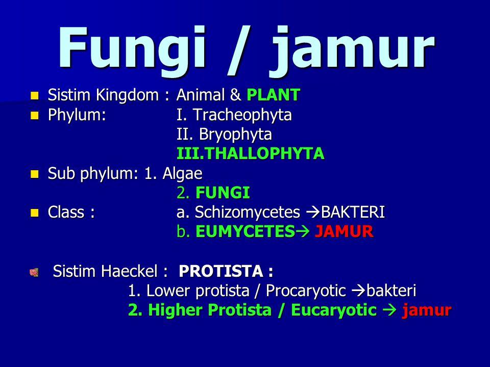 Fungi / jamur Sistim Kingdom : Animal & PLANT Sistim Kingdom : Animal & PLANT Phylum:I. Tracheophyta Phylum:I. Tracheophyta II. Bryophyta III.THALLOPH