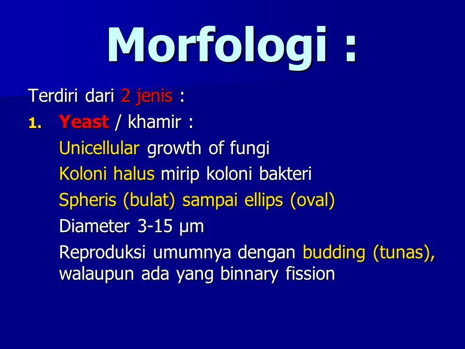 Morfologi : Terdiri dari 2 jenis : 1. Yeast / khamir : Unicellular growth of fungi Koloni halus mirip koloni bakteri Spheris (bulat) sampai ellips (ov