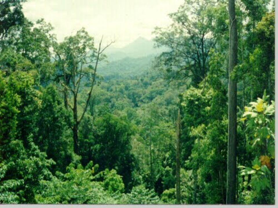 Perubahan Lingkungan karena Faktor Alam  Perubahan lingkungan secara alami disebabkan oleh bencana alam.