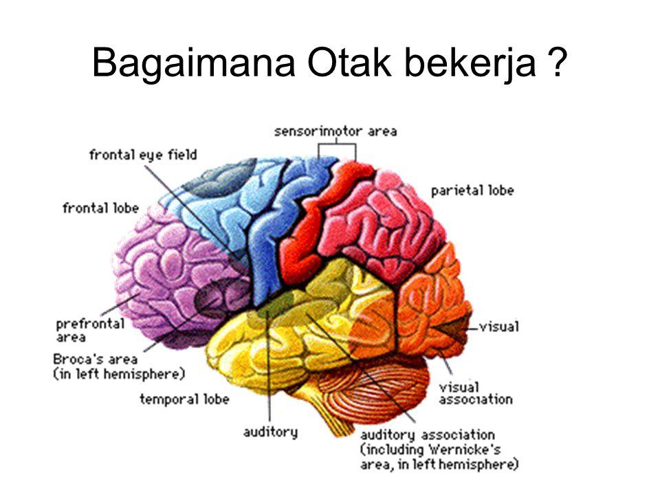 Bagaimana Otak bekerja