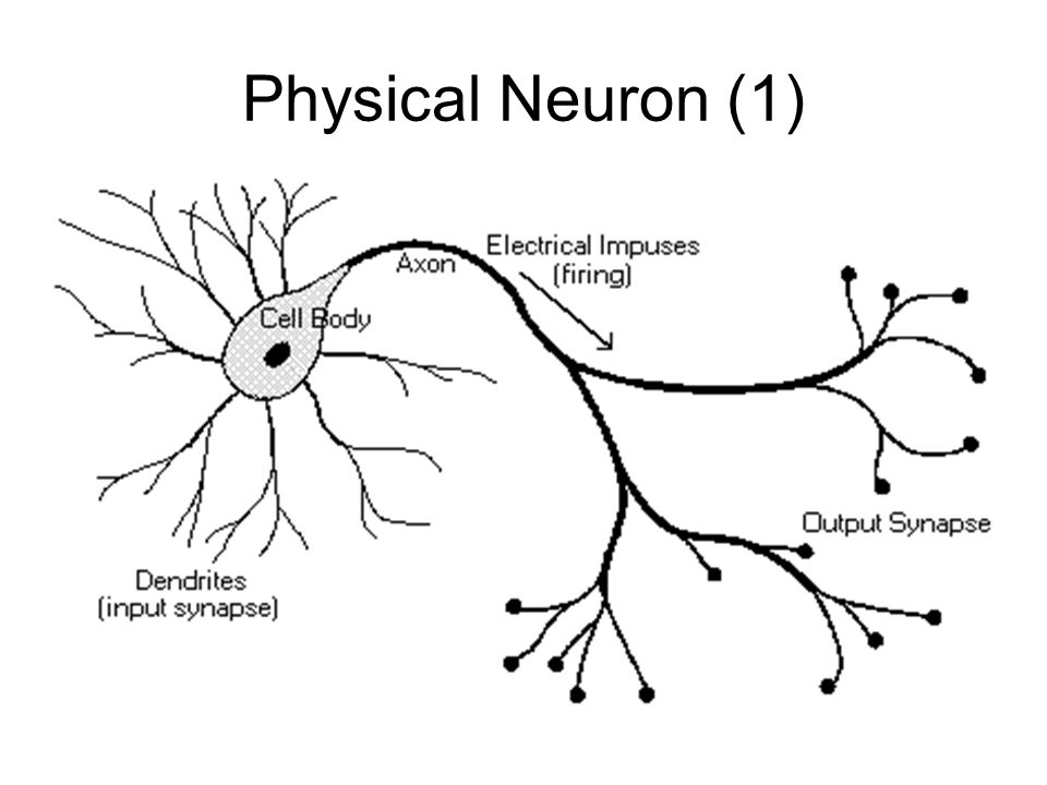 Physical Neuron (2)