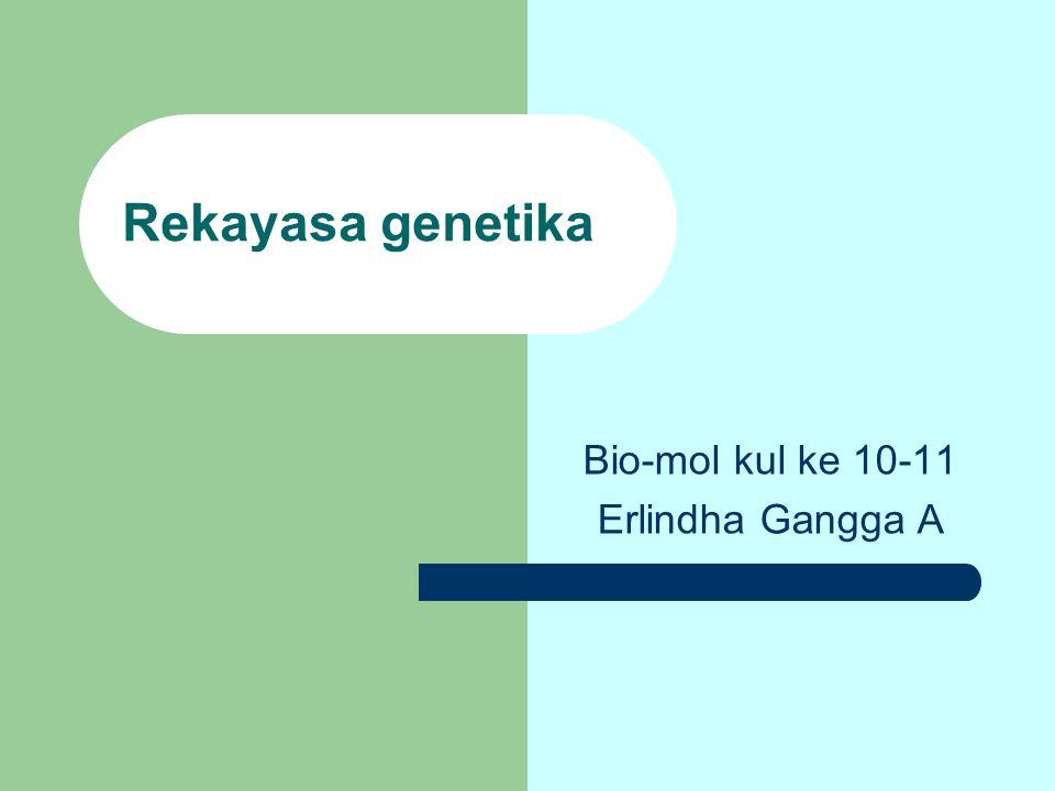 Rekayasa genetika Bio-mol kul ke 10-11 Erlindha Gangga A