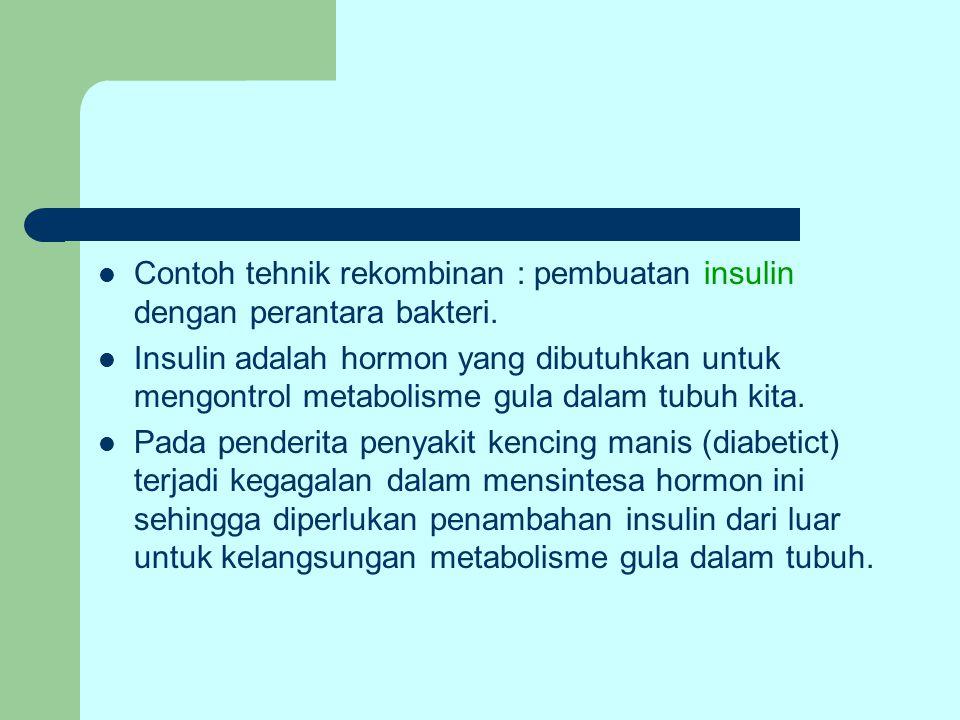 Contoh tehnik rekombinan : pembuatan insulin dengan perantara bakteri. Insulin adalah hormon yang dibutuhkan untuk mengontrol metabolisme gula dalam t
