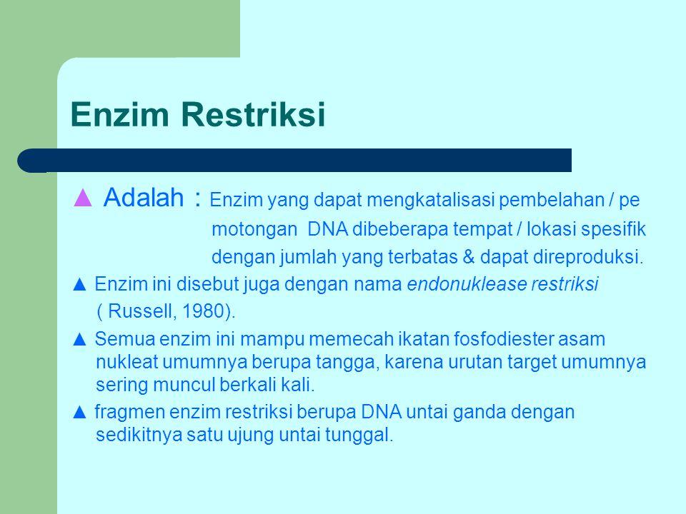 Enzim Restriksi ▲ Adalah : Enzim yang dapat mengkatalisasi pembelahan / pe motongan DNA dibeberapa tempat / lokasi spesifik dengan jumlah yang terbata