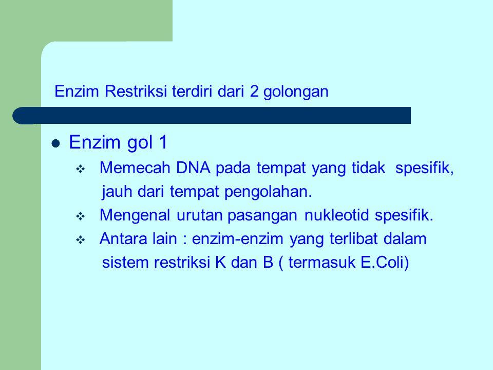 Enzim gol 1  Memecah DNA pada tempat yang tidak spesifik, jauh dari tempat pengolahan.  Mengenal urutan pasangan nukleotid spesifik.  Antara lain :