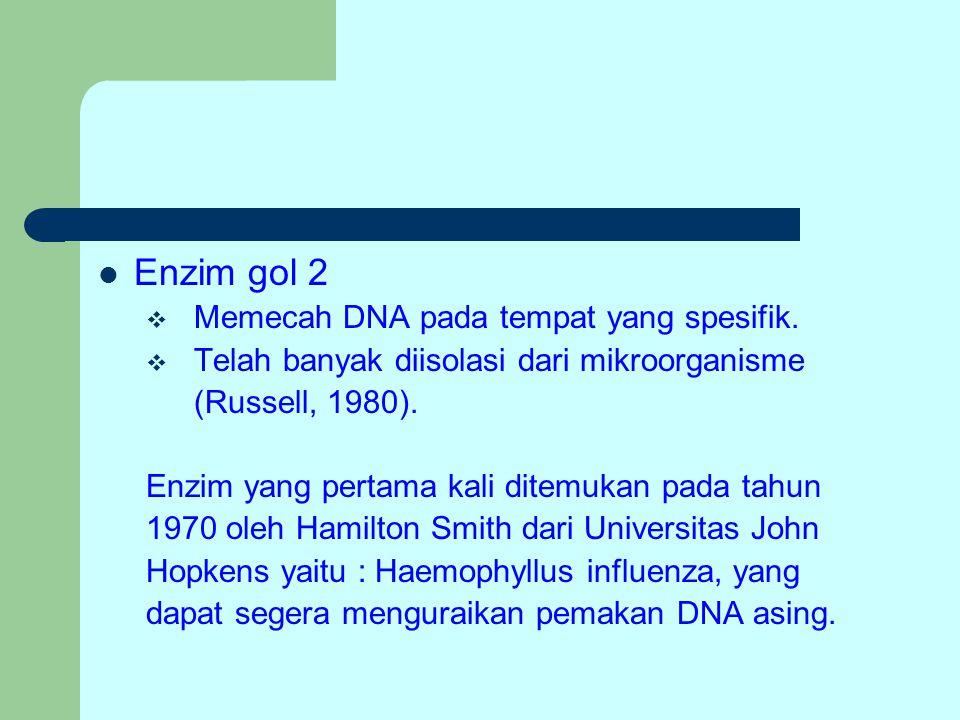 Enzim gol 2  Memecah DNA pada tempat yang spesifik.  Telah banyak diisolasi dari mikroorganisme (Russell, 1980). Enzim yang pertama kali ditemukan p
