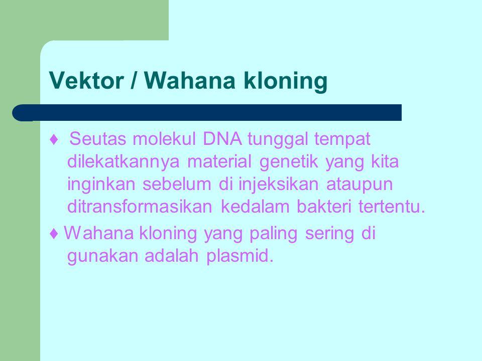 Vektor / Wahana kloning ♦ Seutas molekul DNA tunggal tempat dilekatkannya material genetik yang kita inginkan sebelum di injeksikan ataupun ditransfor