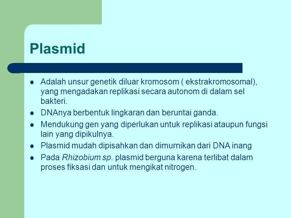 Plasmid Adalah unsur genetik diluar kromosom ( ekstrakromosomal), yang mengadakan replikasi secara autonom di dalam sel bakteri. DNAnya berbentuk ling