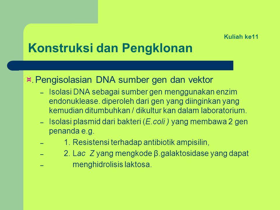 Kuliah ke11 Konstruksi dan Pengklonan ¤. Pengisolasian DNA sumber gen dan vektor – Isolasi DNA sebagai sumber gen menggunakan enzim endonuklease. dipe
