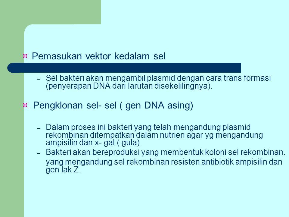 ¤. Pemasukan vektor kedalam sel – Sel bakteri akan mengambil plasmid dengan cara trans formasi (penyerapan DNA dari larutan disekelilingnya). ¤. Pengk