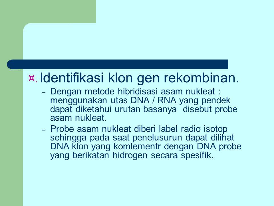 ¤. Identifikasi klon gen rekombinan. – Dengan metode hibridisasi asam nukleat : menggunakan utas DNA / RNA yang pendek dapat diketahui urutan basanya