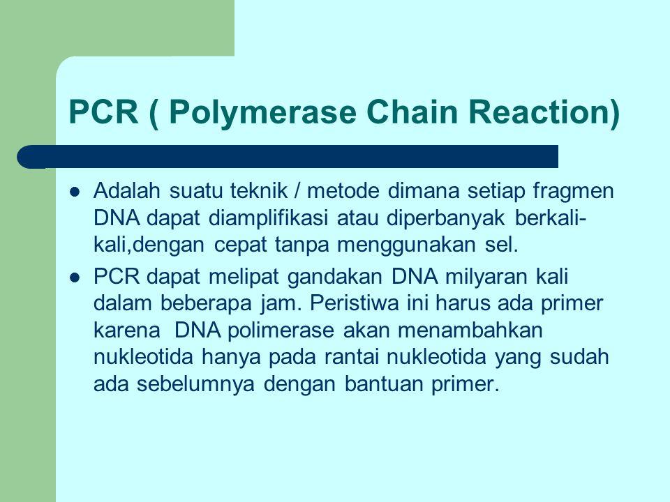PCR ( Polymerase Chain Reaction) Adalah suatu teknik / metode dimana setiap fragmen DNA dapat diamplifikasi atau diperbanyak berkali- kali,dengan cepa