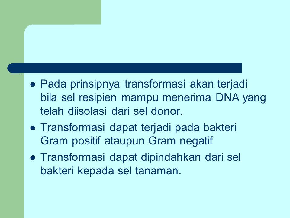Pada prinsipnya transformasi akan terjadi bila sel resipien mampu menerima DNA yang telah diisolasi dari sel donor. Transformasi dapat terjadi pada ba