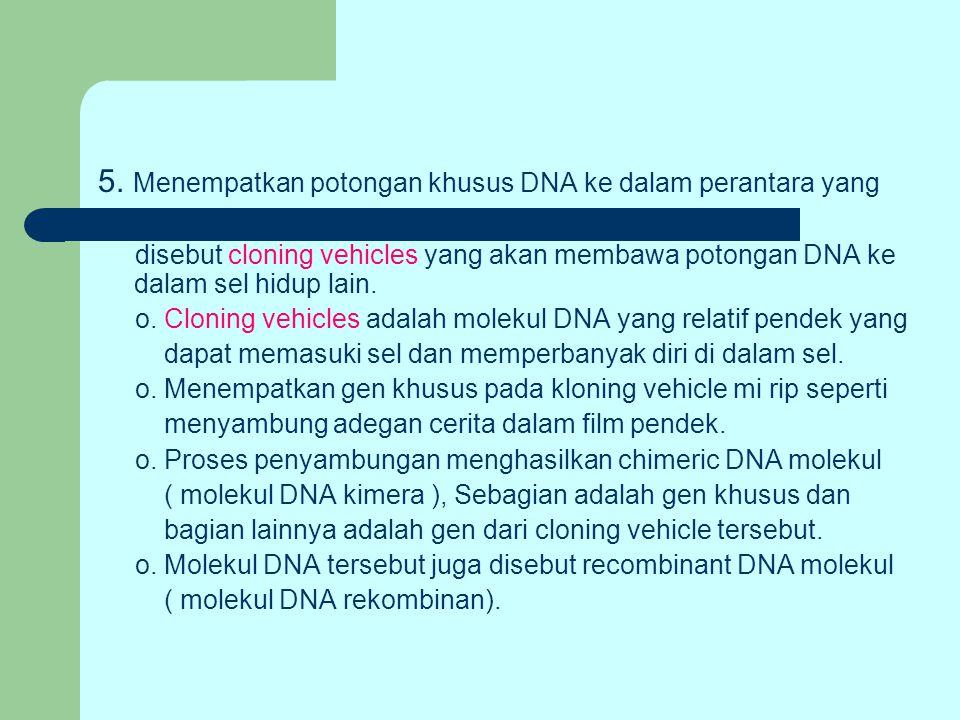 5. Menempatkan potongan khusus DNA ke dalam perantara yang disebut cloning vehicles yang akan membawa potongan DNA ke dalam sel hidup lain. o. Cloning
