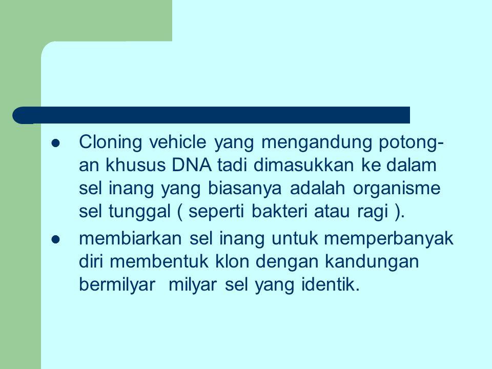 Cloning vehicle yang mengandung potong- an khusus DNA tadi dimasukkan ke dalam sel inang yang biasanya adalah organisme sel tunggal ( seperti bakteri