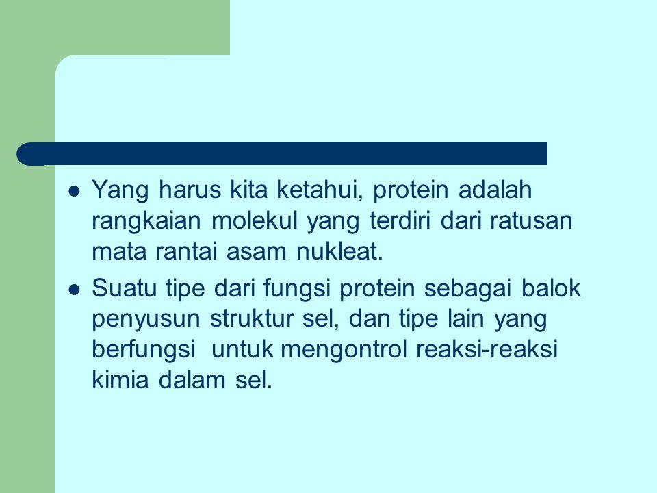 Yang harus kita ketahui, protein adalah rangkaian molekul yang terdiri dari ratusan mata rantai asam nukleat. Suatu tipe dari fungsi protein sebagai b