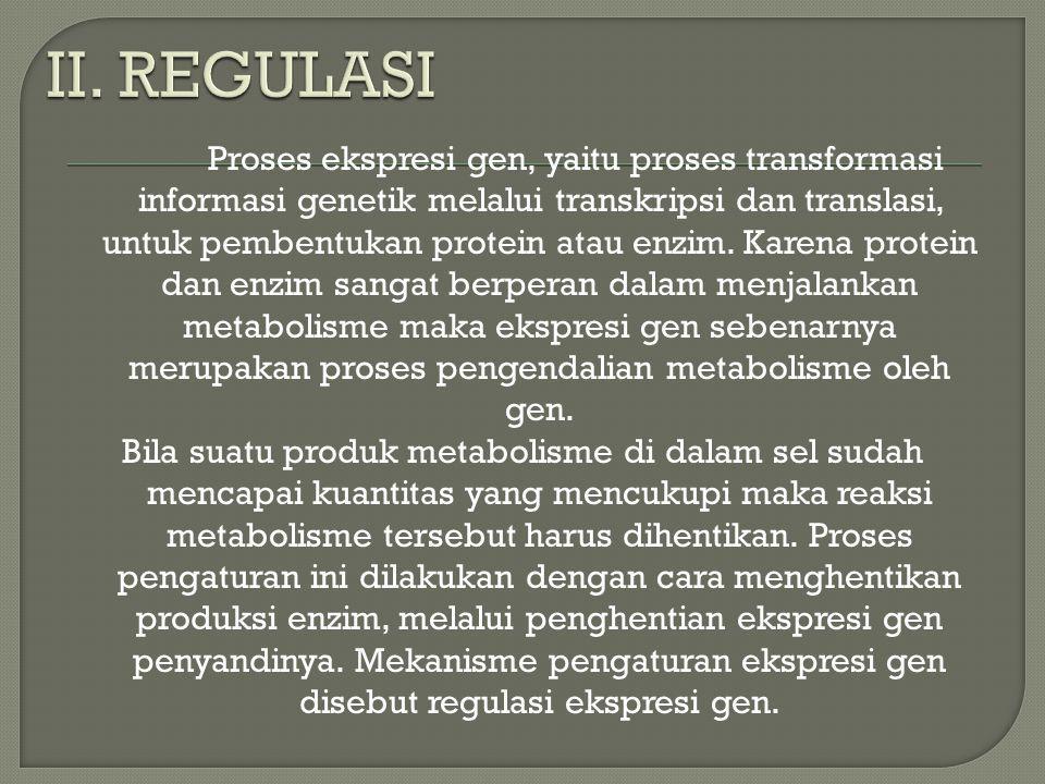 Proses ekspresi gen, yaitu proses transformasi informasi genetik melalui transkripsi dan translasi, untuk pembentukan protein atau enzim. Karena prote