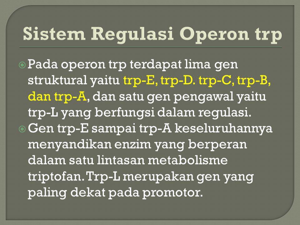 Sistem Regulasi Operon trp  Pada operon trp terdapat lima gen struktural yaitu trp-E, trp-D. trp-C, trp-B, dan trp-A, dan satu gen pengawal yaitu trp