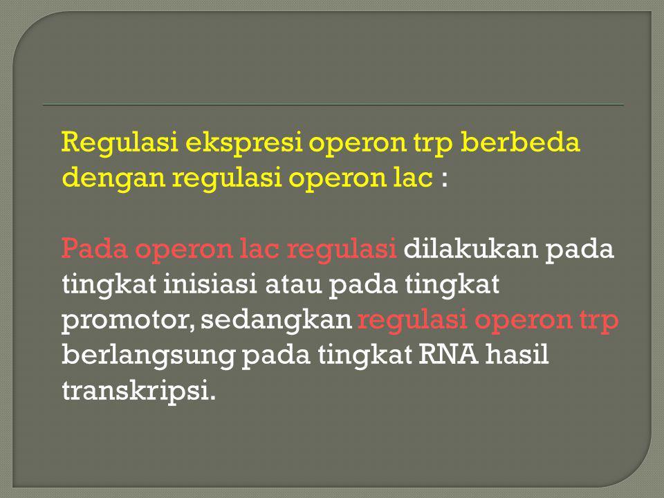 Regulasi ekspresi operon trp berbeda dengan regulasi operon lac : Pada operon lac regulasi dilakukan pada tingkat inisiasi atau pada tingkat promotor,