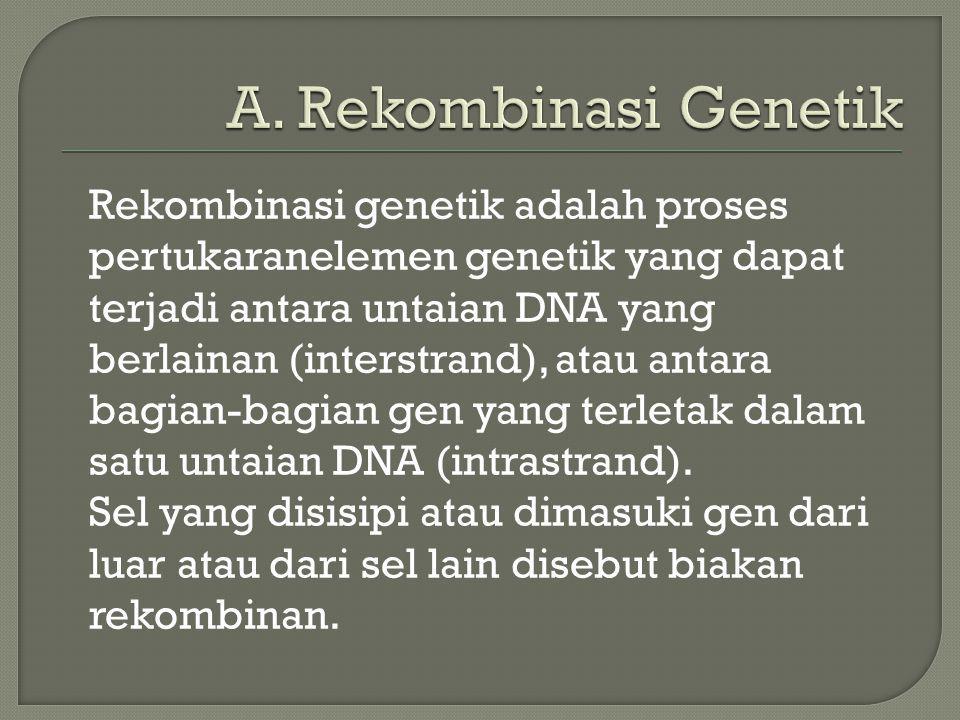 Rekombinasi genetik adalah proses pertukaranelemen genetik yang dapat terjadi antara untaian DNA yang berlainan (interstrand), atau antara bagian-bagi