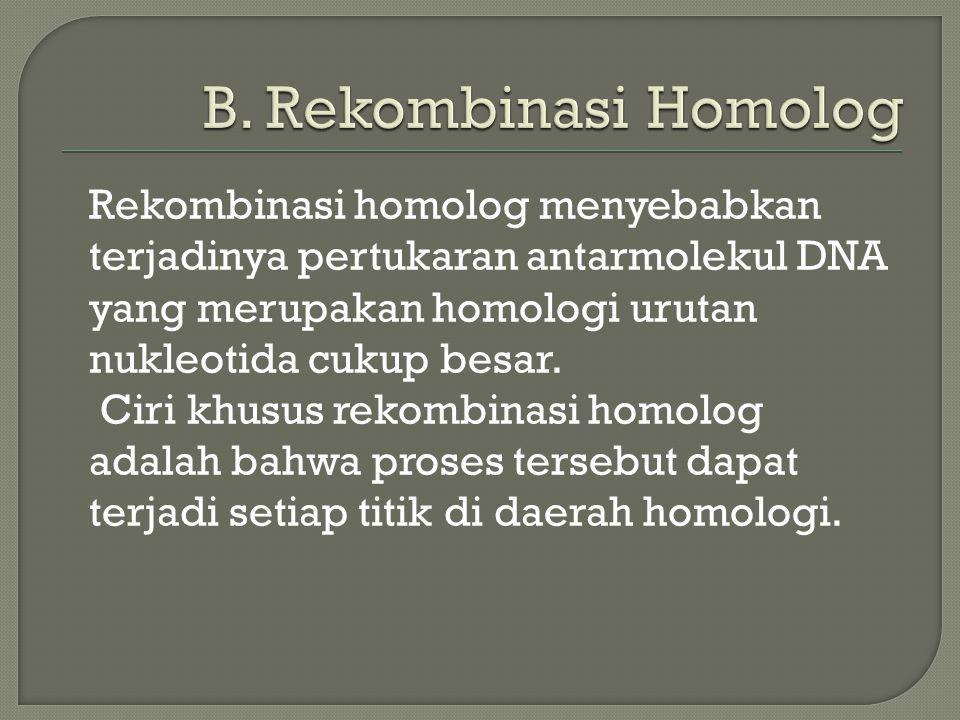 Rekombinasi homolog menyebabkan terjadinya pertukaran antarmolekul DNA yang merupakan homologi urutan nukleotida cukup besar. Ciri khusus rekombinasi