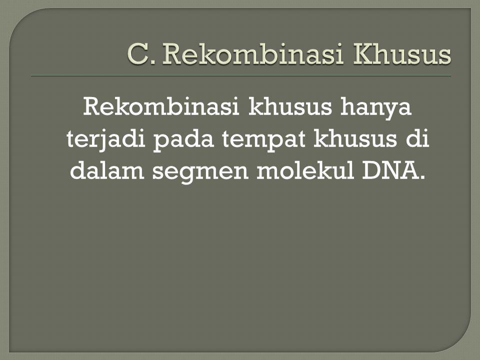 Rekombinasi khusus hanya terjadi pada tempat khusus di dalam segmen molekul DNA.