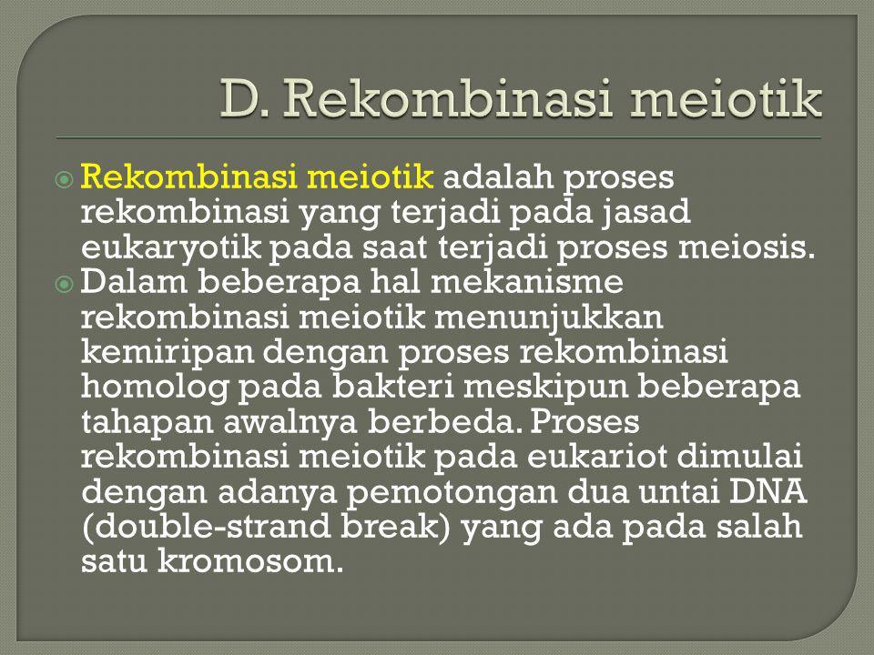  Rekombinasi meiotik adalah proses rekombinasi yang terjadi pada jasad eukaryotik pada saat terjadi proses meiosis.  Dalam beberapa hal mekanisme re