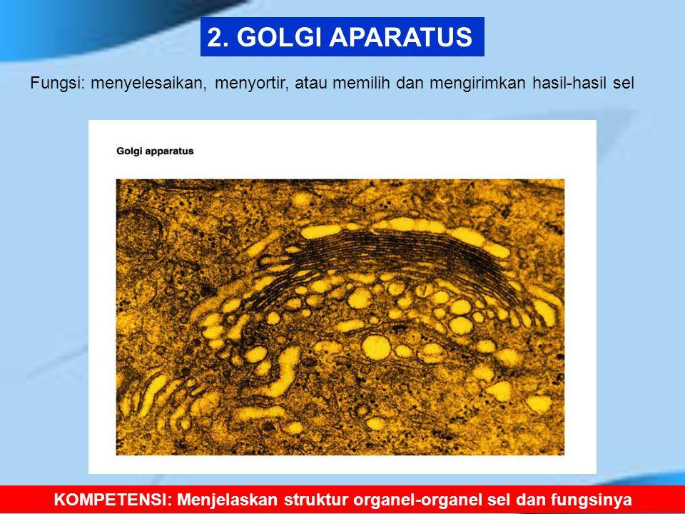 2. GOLGI APARATUS KOMPETENSI: Menjelaskan struktur organel-organel sel dan fungsinya Fungsi: menyelesaikan, menyortir, atau memilih dan mengirimkan ha