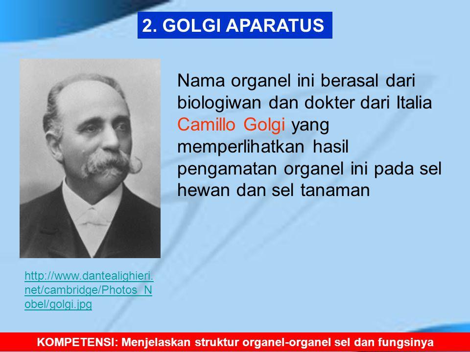 2. GOLGI APARATUS http://www.dantealighieri. net/cambridge/Photos_N obel/golgi.jpg Nama organel ini berasal dari biologiwan dan dokter dari Italia Cam