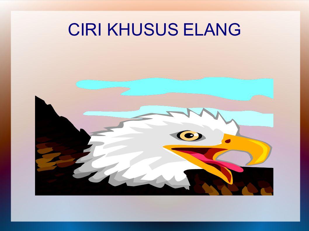 CIRI KHUSUS ELANG