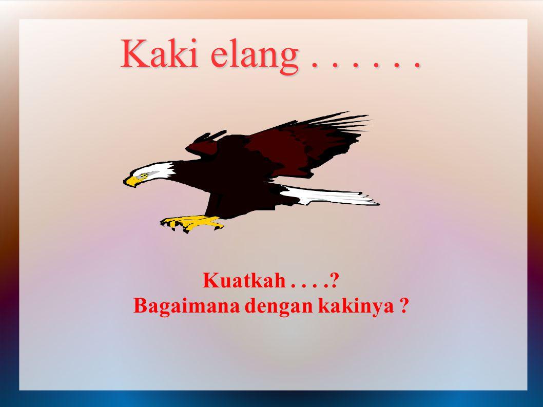 Kaki elang...... Kuatkah.... Bagaimana dengan kakinya