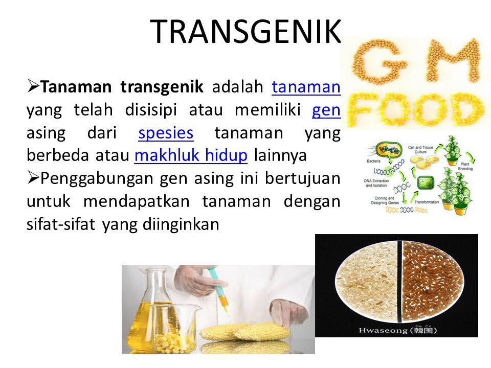 TRANSGENIK  Tanaman transgenik adalah tanaman yang telah disisipi atau memiliki gen asing dari spesies tanaman yang berbeda atau makhluk hidup lainny