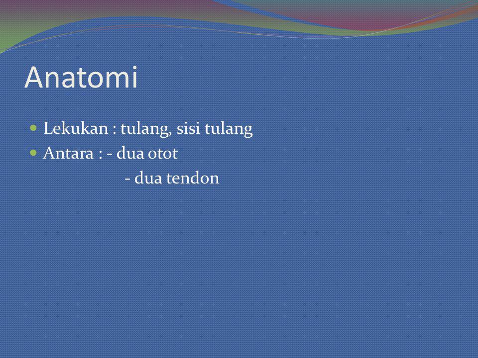 Anatomi Lekukan : tulang, sisi tulang Antara : - dua otot - dua tendon