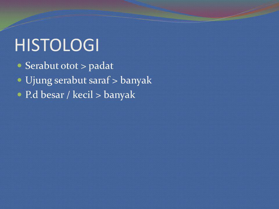 HISTOLOGI Serabut otot > padat Ujung serabut saraf > banyak P.d besar / kecil > banyak