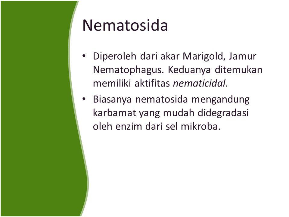 Nematosida Diperoleh dari akar Marigold, Jamur Nematophagus.