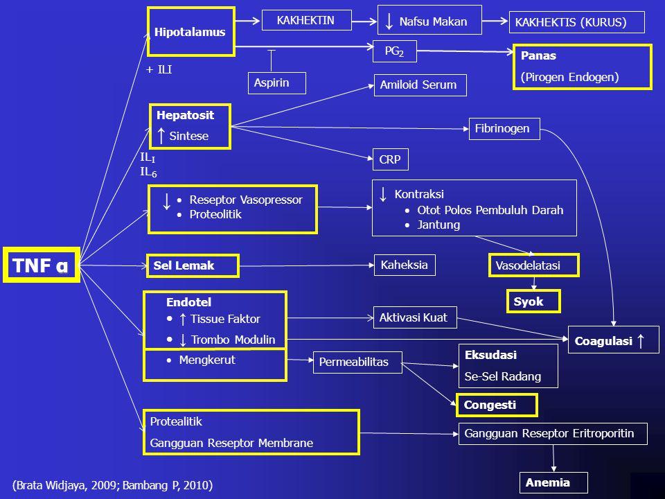 α TNF α Hipotalamus PG 2 + ILI Aspirin Panas (Pirogen Endogen) Hepatosit ↑ Sintese Coagulasi ↑ Aktivasi Kuat Kaheksia Amiloid Serum Fibrinogen CRP ↓ K